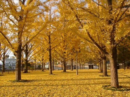 hobby_autumn_007s